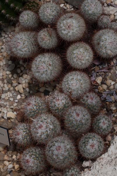 2009 06 30_NY Botanical Gardens_0706.jpg