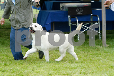 Sweepstakes Puppy 9-12Months Dogs