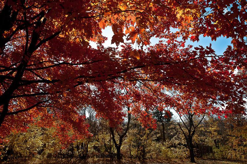 fall23.jpg