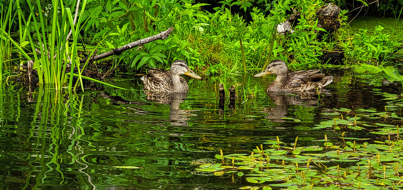 08-05-2021 Beaver Creek Kayak with Dan and Kalli-8.jpg