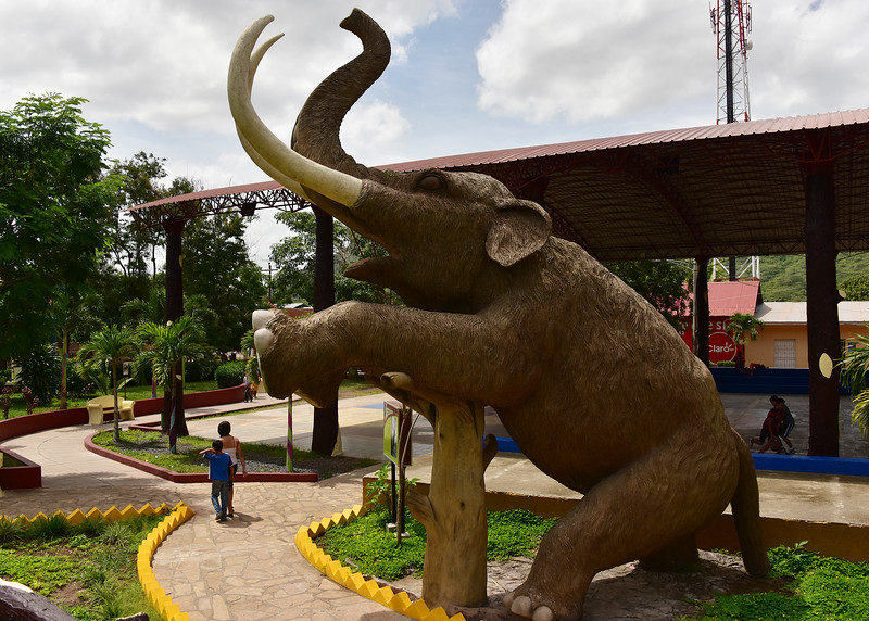 NIC_0230-7x5-Elephant in Park.jpg