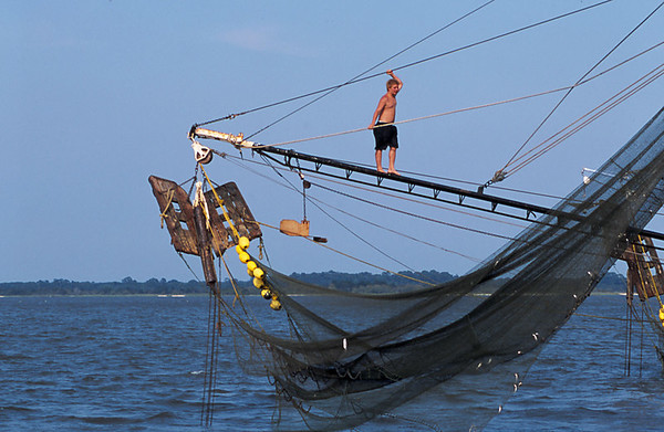 Shrimp Boats of the Golden Isles