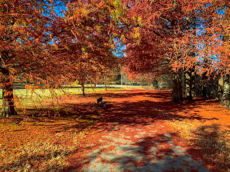 willmore park fall foliage st louis
