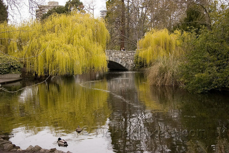 Goodacre Lake in Beacon Hill Park, Victoria, B.C.