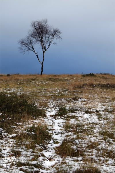 snow path tree