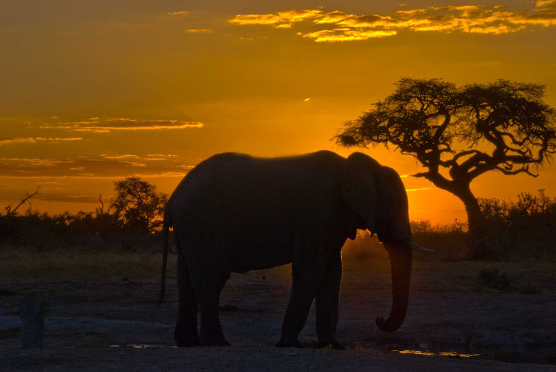Elephant at Sunset1.jpg