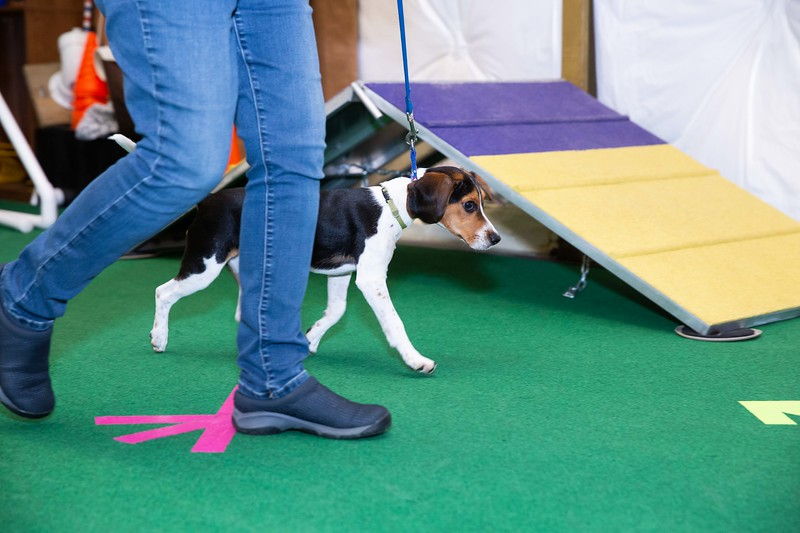 on Command dog Training June 2019-5145.jpg
