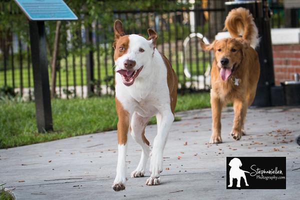 pet_photography_Tampa_Stephaniellenphotography.com-8897.jpg