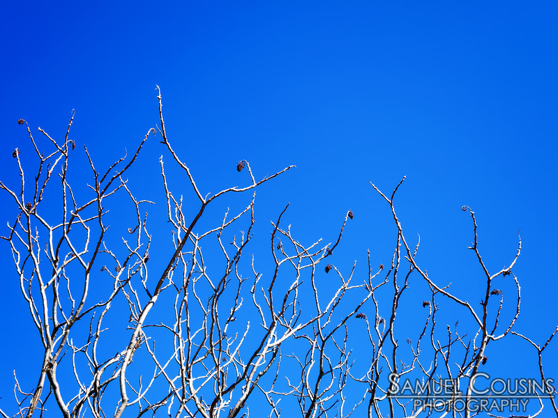 Some twisted looking tree branches reaching into the sky near Standpipe Park and the Shailer School building.