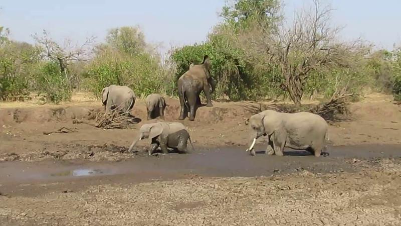 Botswana Mashatu Wildlife Video