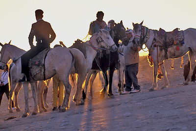 horses- Jordan 1.jpg