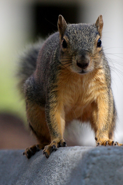 Squirrel Stare-down