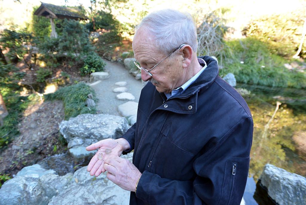 . Garden Director Paul Licht holds gelatinous newt egg clusters at the University of California Botanical Garden in Berkeley, Calif. on Monday, Feb. 11, 2013. (Kristopher Skinner/Staff)