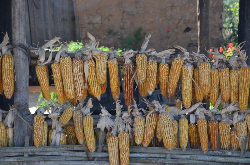 DSC_4190-dried-corn.JPG