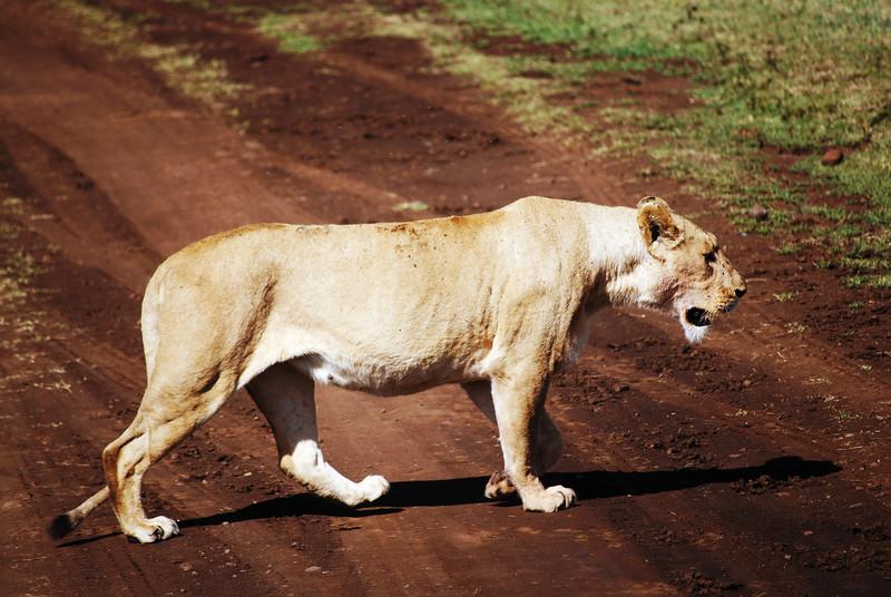 Ngorongoro (75).JPG