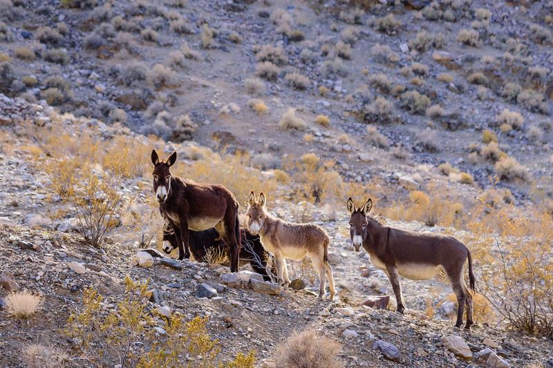 088-Death-Valley-Mountain-Cabins.jpg