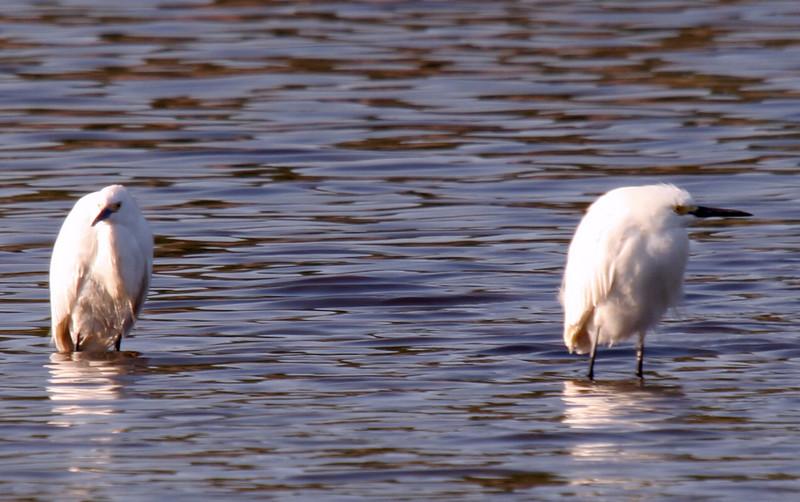Wildlife May 24 2007 112.jpg