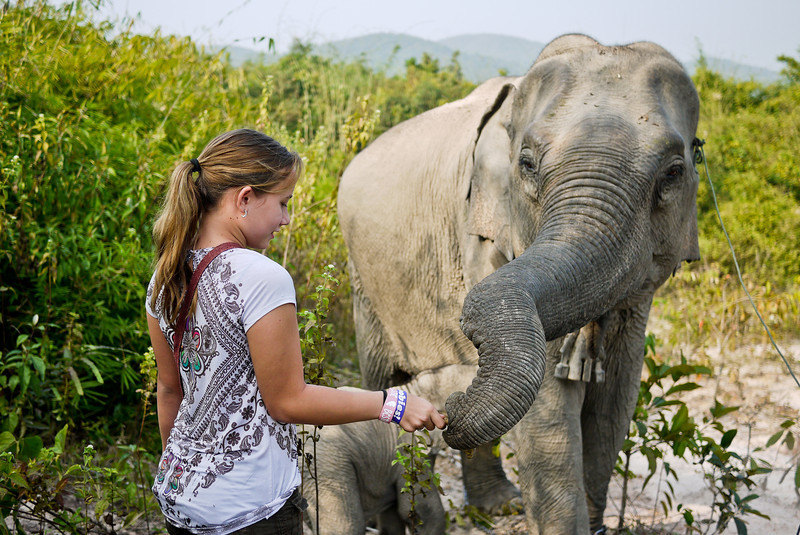 Ana meets a mother elephant and her tiny two month old baby elephant.