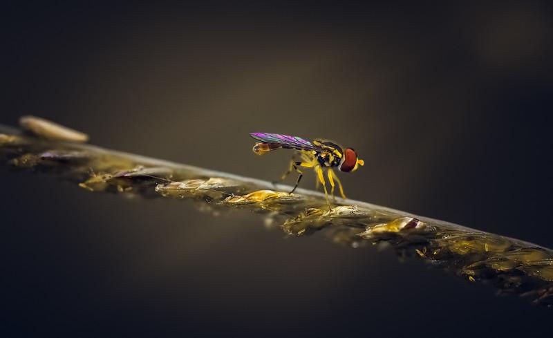 Ugly Bugs&Beautiful Beetles-212.jpg