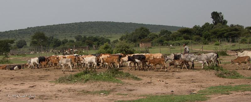 MasaiS-9.jpg