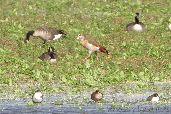 2016-10-18 Riverlands Migratory Bird Sanctuary