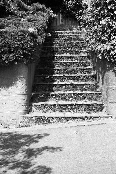 070511-003BW (Abstract; Sidewalk, Stairs, Bushes, Shadows).jpg