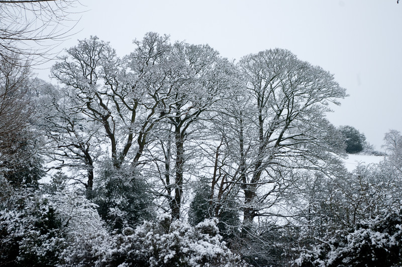Winter trees in snow