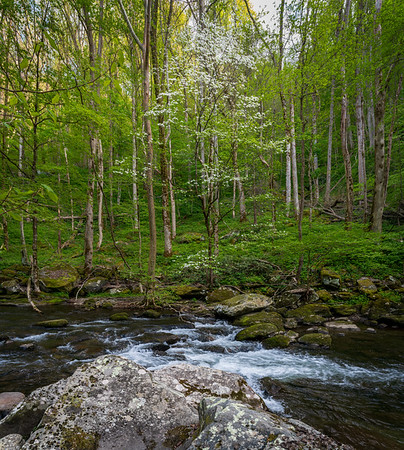 Spring in Smoky Mountain National Park