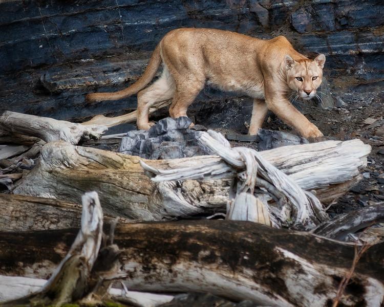 Chile-2019-Wildlife-new--6.jpeg