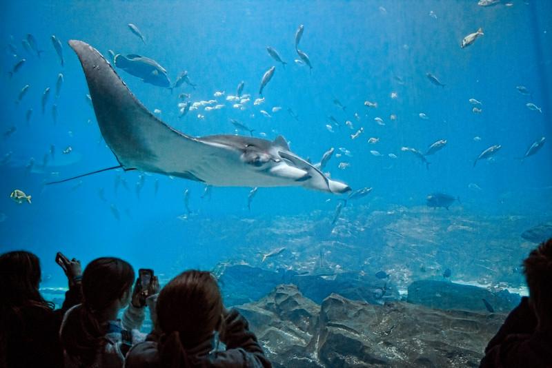aquarium_0089.jpg