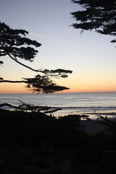 Carmel Beach and Trees