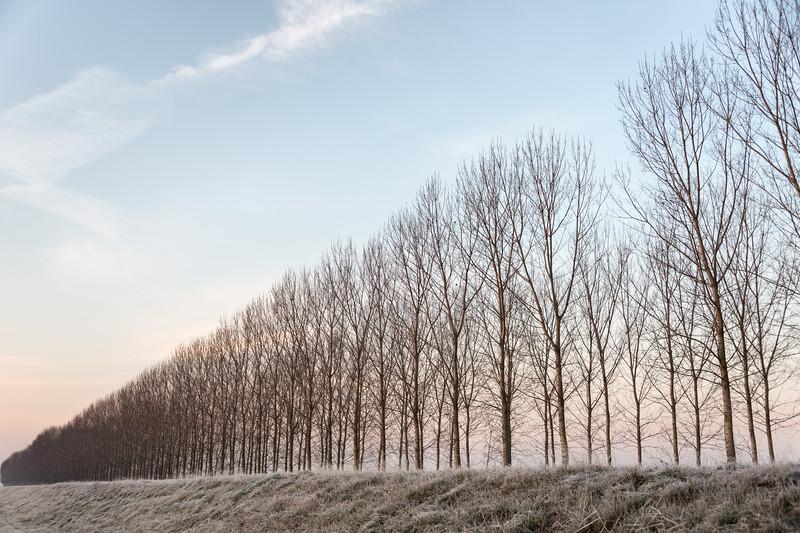 Poplars - Sant'Agata Bolognese, Bologna, Italy - December 19, 2017