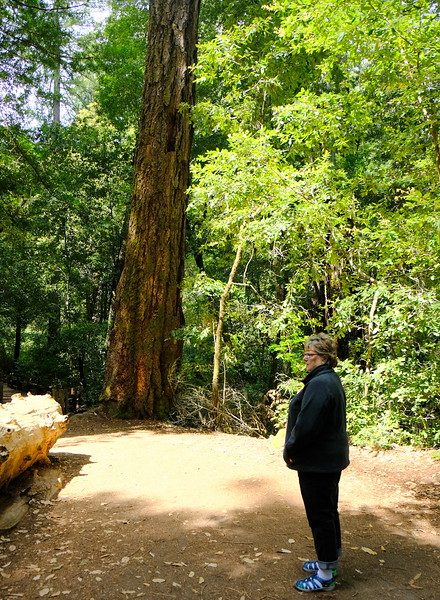 California Day 4 Big Basin 05-29-2017 36.JPG