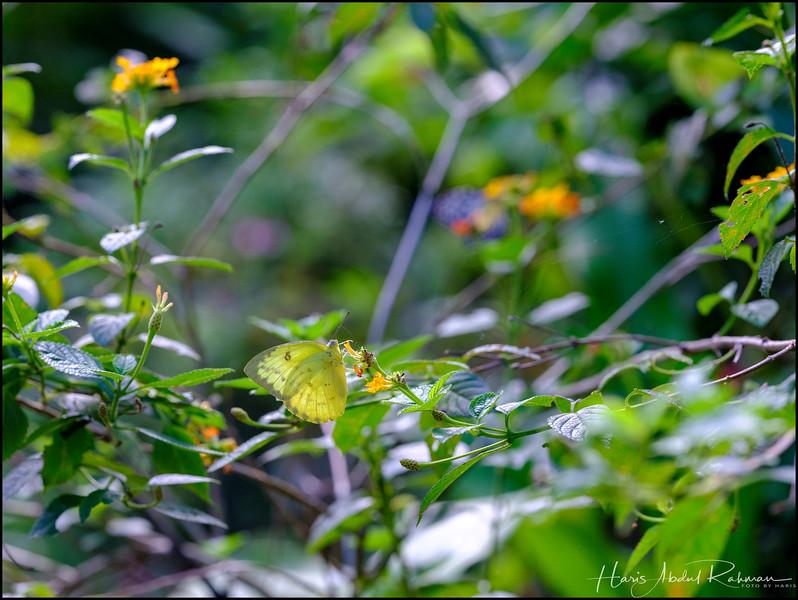 200104 KL Butterfly Park 42.jpg