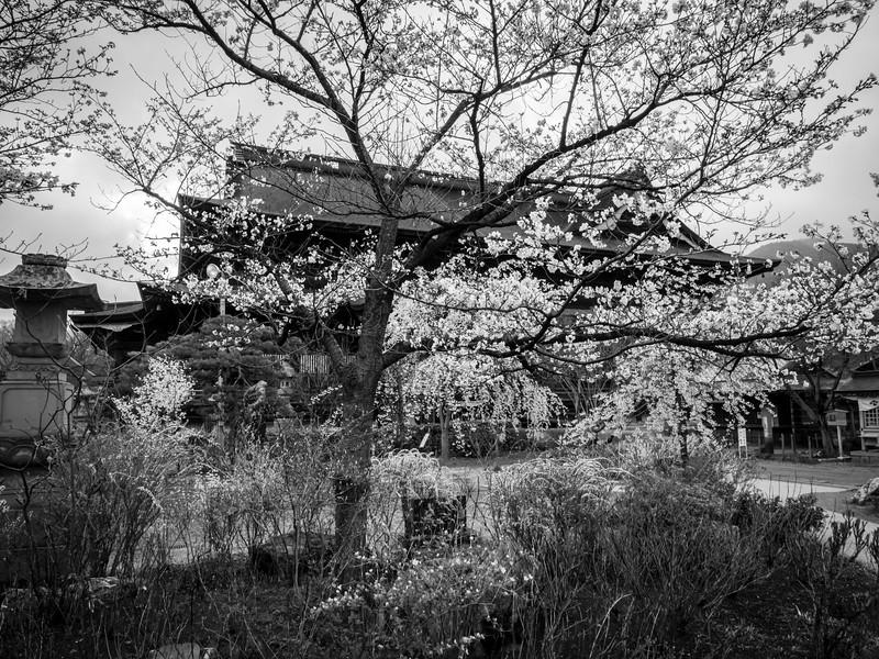 Nagano 12041353 .jpg