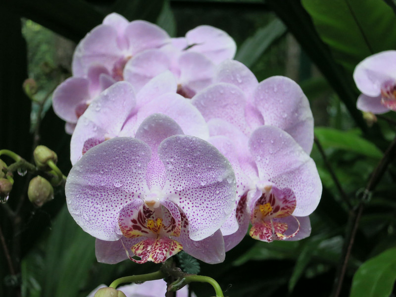1726 Orchid Garden.jpg