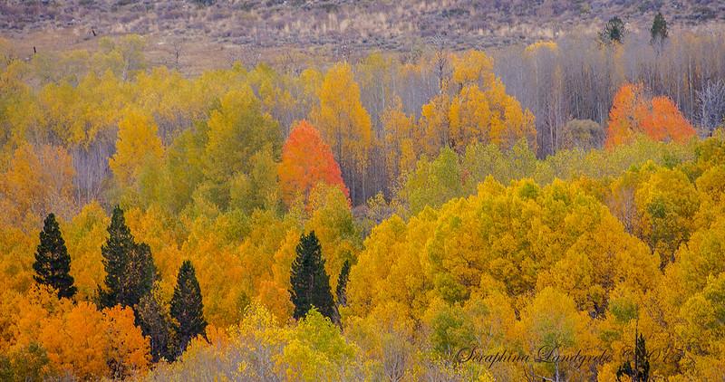 _DSC4745Fall trees.jpg