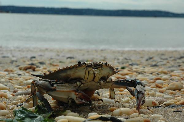 AP Environmental Science (APES) and Oceanography Sandy Hook Trip
