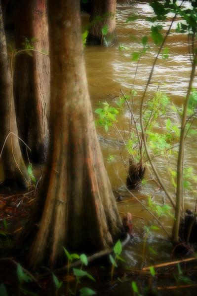 Lake Fausse Pointe, Louisiana