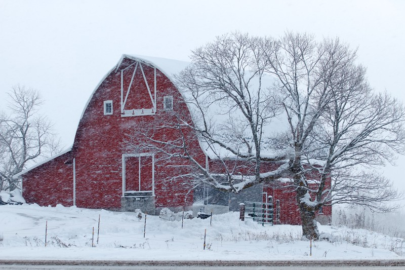 Barn red in snow CR47 Sax-Zim Bog MN IMG_8322.jpg