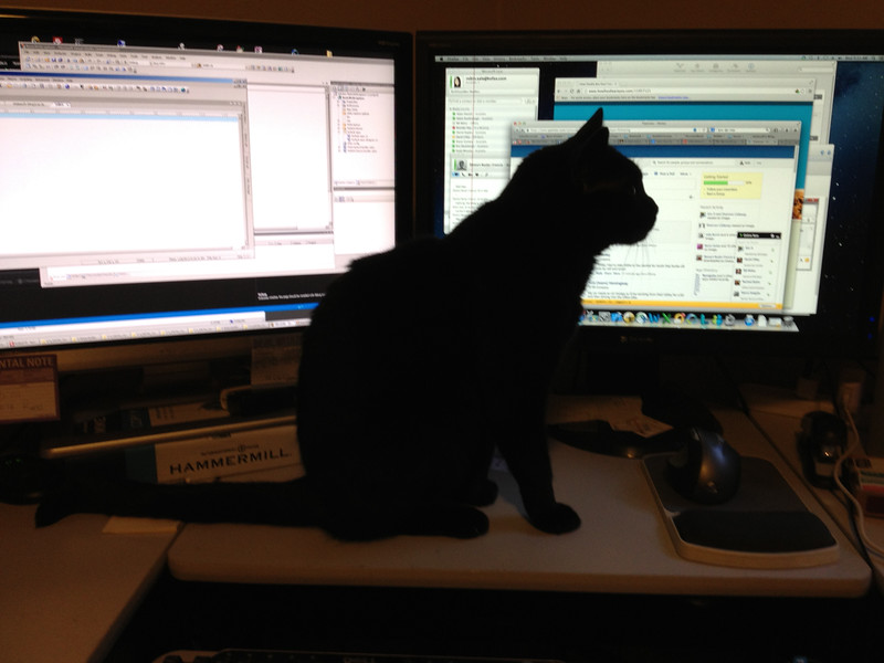 The problem with bring your cat to work day...