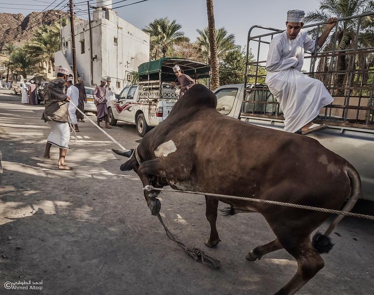 Traditional market (63)- Oman.jpg