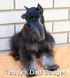 Teddy Dad gadget.jpg