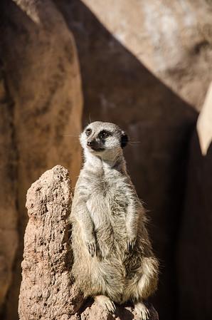 2013 10 06 Colorado Mtn Zoo