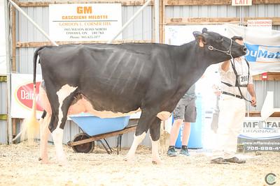 Ontario Summer Holstein Sr Cows 2018