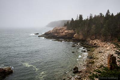 Acadia in the spring, 2015