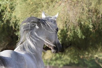 SE stallion Liberty PROOFS