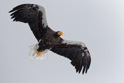 Eagle Season 2017/18