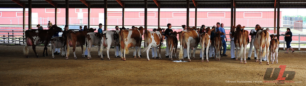 2012 Dairy Shows