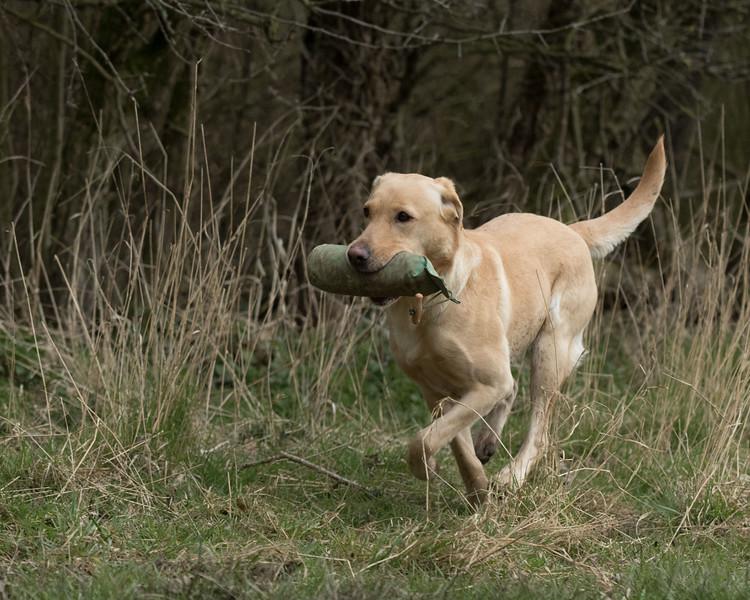 Dogs-5120.jpg